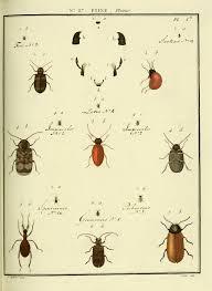 La cité des insectes à Saint Léons